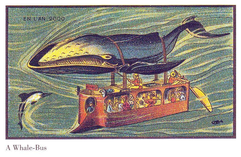 bus baleine