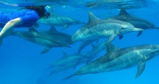 nage-dauphins